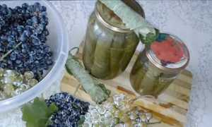 Как мариновать и солить листья винограда для долмы на зиму (рецепт)
