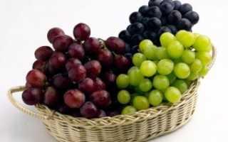 Выращивание винограда в теплице: технология, уход, полив, болезни