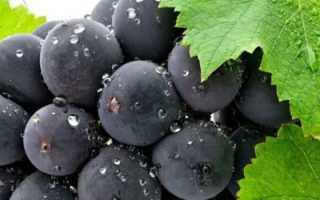 Сонник Виноград: к чему снится виноград женщине