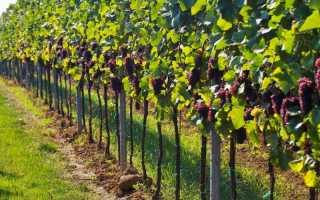 Шпалера для винограда своими руками: как сделать, установить и подвязать виноград