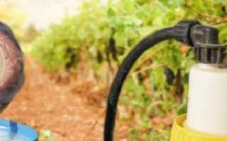 Раствор коллоидной серы: инструкция по применению для опрыскивания винограда