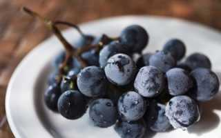 Виноград Русский конкорд: описание столового сорта, выращивание уход и отзывы с фото