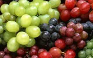 Виноград Рондо: что нужно знать о нем, описание сорта, отзывы