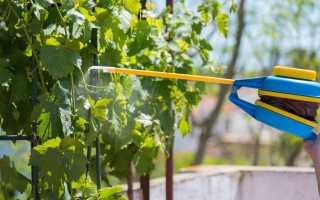 Опрыскивание винограда весной от болезней медным или железным купоросом