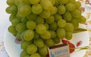 Виноград Особый: что нужно знать о нем, описание сорта, отзывы