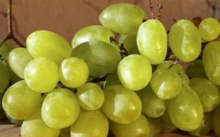 Сорт винограда «Зарница»: особенности сорта и выращивания