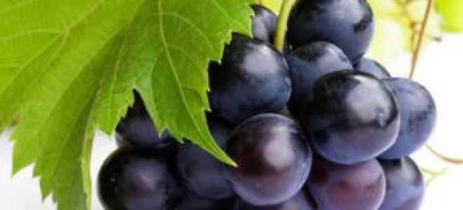 Аллергия на виноград: симптомы, причины и лечение