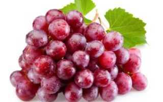 """Виноград """"Ред Глоб"""" – описание сорта, характеристика гроздей с фото и отзывами"""