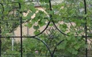 Арка для винограда своими руками